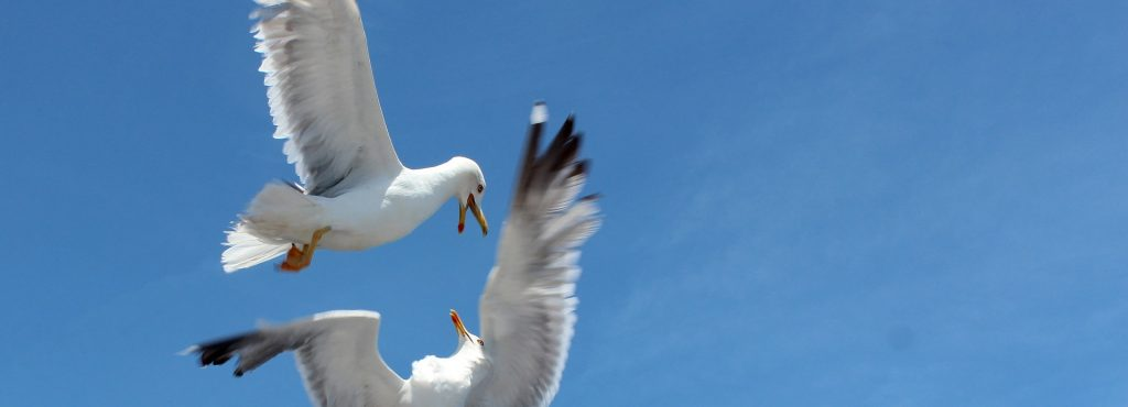 seagull-3380684_1920